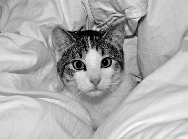 Katze von Kunde www.fuettern-mit-spass.de